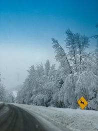 Winter's drive